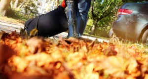 Spring and Fall Cleanup Services in Waukesha County