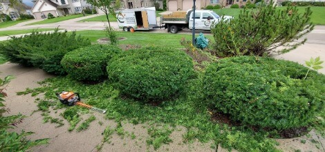 Professional Hedge Trimming in Mukwonago Wisconsin