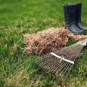 Lawn Dethatching Services in Waukesha